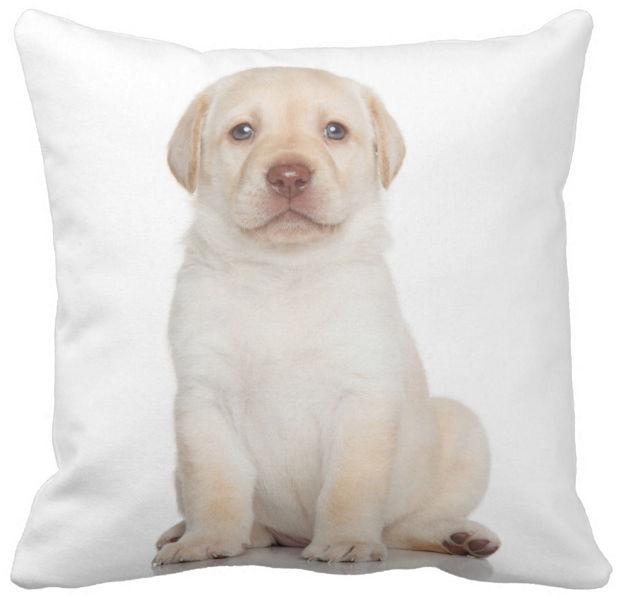 Poduszka Dekoracyjna Pies Labrador Retriever Pod 6588